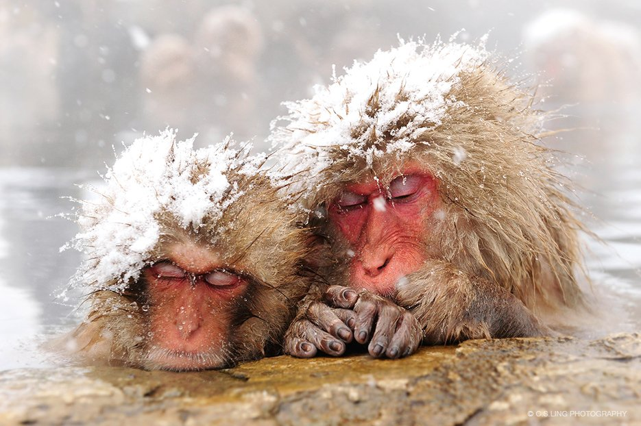 csling_japan_snowmonkey_mother-child_onsen_tn.jpg